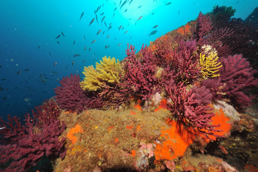 plongee-reserve-naturelle-port-cros-e1442996383149